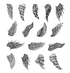 Wings graphic vector