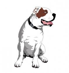 American bulldog vector image vector image