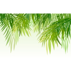 Green palm leaves vector