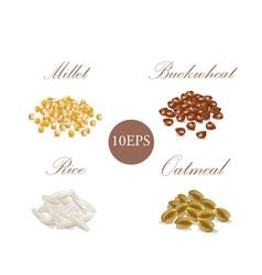 Groats millet buckwheat rice oatmeal vector