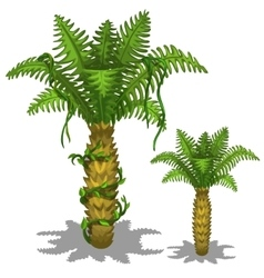 Pineapple palm tree on a white background vector