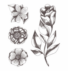 flowers hand drawing set vector image
