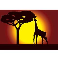 Savanna giraffe acacia vector