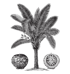 Sago palm sketch vector