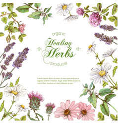 Herbal frame vector