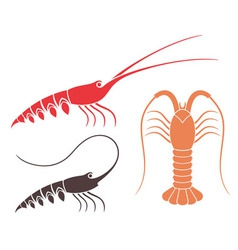 Spiny lobster vector