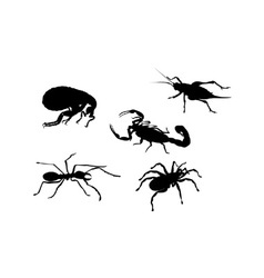 Flea cricket ant spider scorpion insect vector
