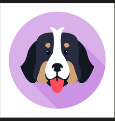 Canine face of bernese mountain dog flat design vector