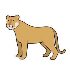 cougar vector image