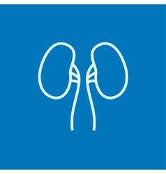 Kidney line icon vector
