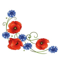Poppies cornflowers vector