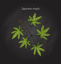 japanese-maple tree branch vector image