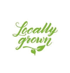 Locally grown hand drawn brush lettering isolated vector