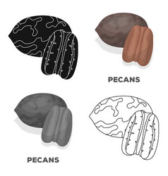 Pecansdifferent kinds of nuts single icon in vector