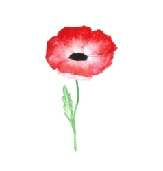 Water color red poppy isolated on white background vector