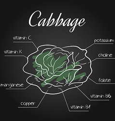 Nutrients list for cabbage on chalkboard backdrop vector