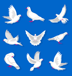 white cartoon pigeon with red beak and paws vector image vector image