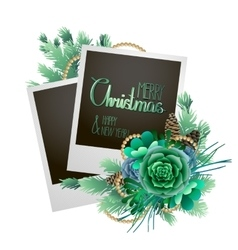 Christmas card with fir and succulents vector image