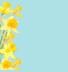 daffodil flowers on blue background with place vector image