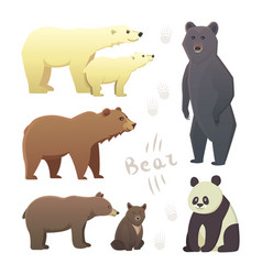 Collection with different cartoon bears isolated vector
