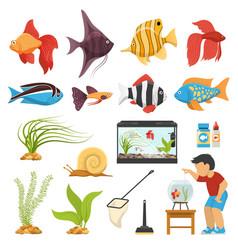 aquaristics aquarium fish set vector image vector image