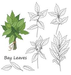 Bay leaves set vector