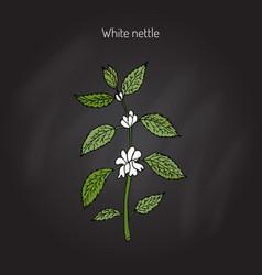 White dead nettle vector