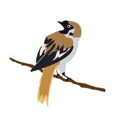 sparrow vector image