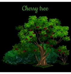 Green cherry tree isolated on black background vector image vector image