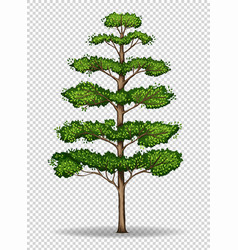 Tall tree on transparent background vector