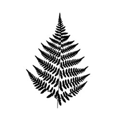 Background black-and-white fern vector