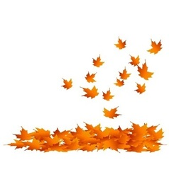 Maple-Leaves Falling vector image vector image