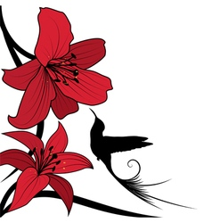 lily and hummingbird vector image vector image