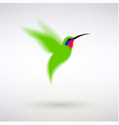 green hummingbird vector image