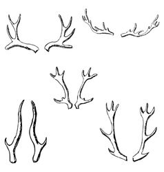 Horn sketch of a deer Pencil drawing by hand vector image