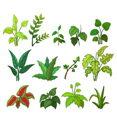 set of tropical plant vector image