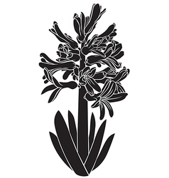 Hyacinth silhouette vector