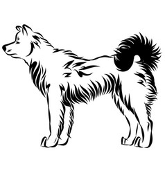 Image of an dog akita vector