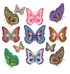 butterflys vector image