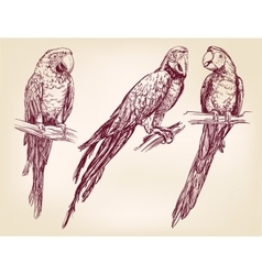 Parrot set isolated hand drawn llustration vector