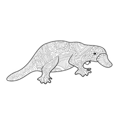 Platypus coloring book for adults vector