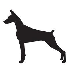 Shadow doberman dog vector