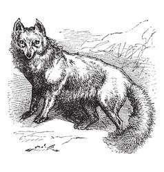 Arctic Fox Sketch vector image
