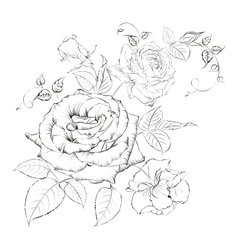 Bouquet of roses vector image