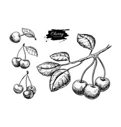 Cherry drawing set isolated hand drawn vector