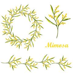 Cartoon mimosa spring flower set vector