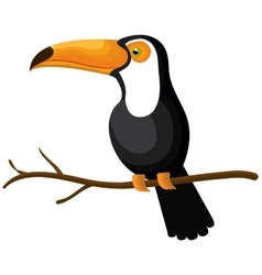 Toucan bird isolated icon vector
