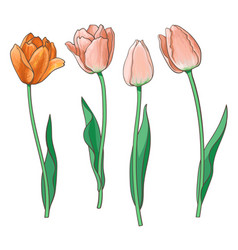 Hand drawn set of side view red pink tulip flower vector