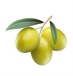 Green olives with leaves vector