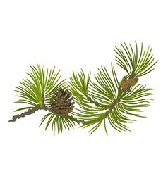 Branch of christmas tree pine branch vector